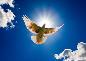 Flügel im Bauch