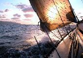 Piraten wie wir